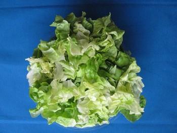 Salatbox mit grünem Kopfsalat